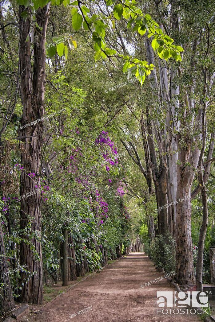 Stock Photo: Tree Path in Galindo, Querétaro, MEXICO.