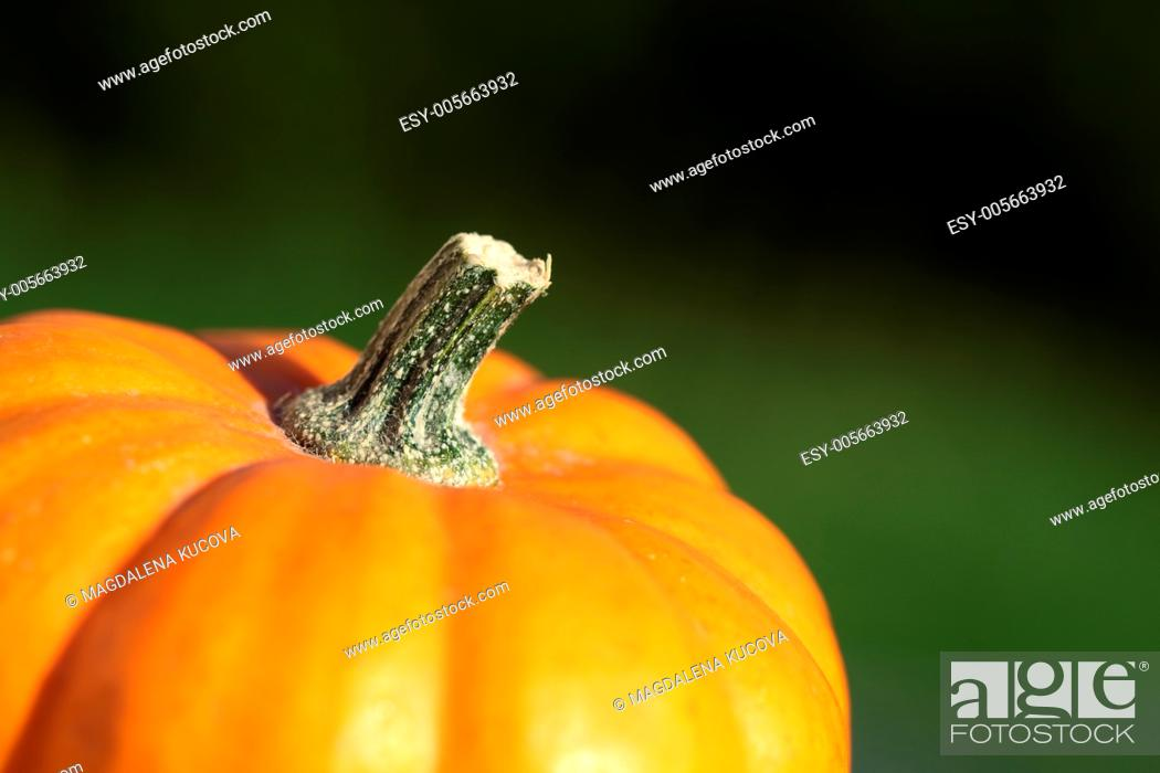Stock Photo: Close-up of pumkin and green grass background.