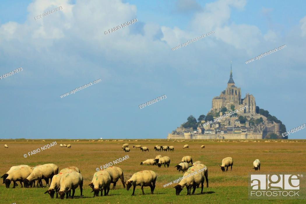Stock Photo: Mont Saint Michel and sheep.