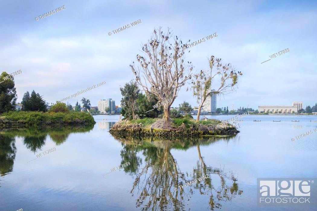 Stock Photo: Cormorants nesting on a tree , Bird island , Lake Merritt, Oakland , California , USA.
