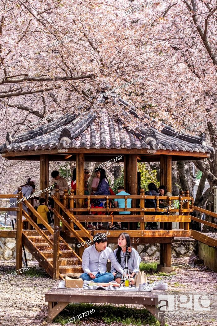 Jinhae Cherry Blossom Festival In South Korea Gyeonghwayeok Train Stock Photo Picture And Rights Managed Image Pic U37 2872760 Agefotostock,Small Square Kitchen Design Layout Pictures