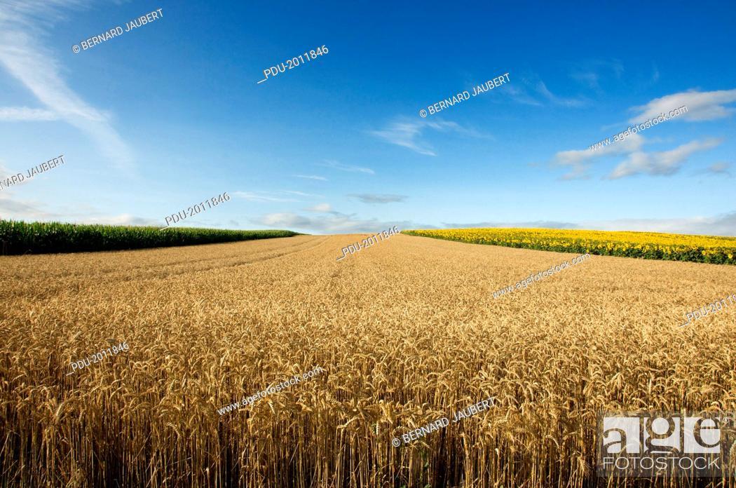 Stock Photo: Agricultural landscape, Limagne, France.