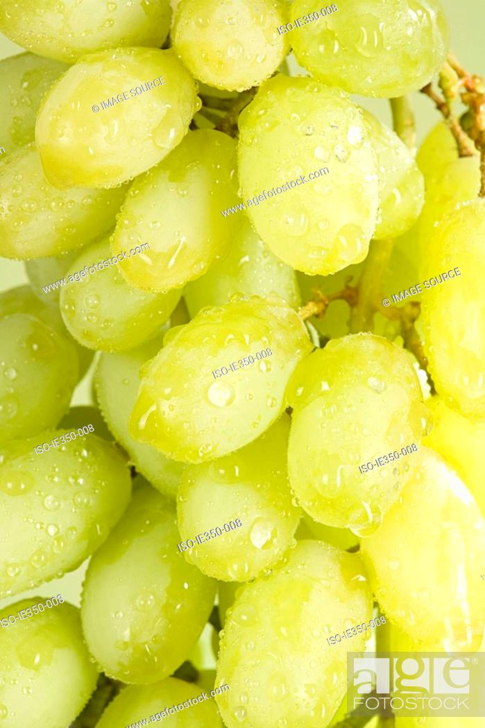 Stock Photo: Grapes.
