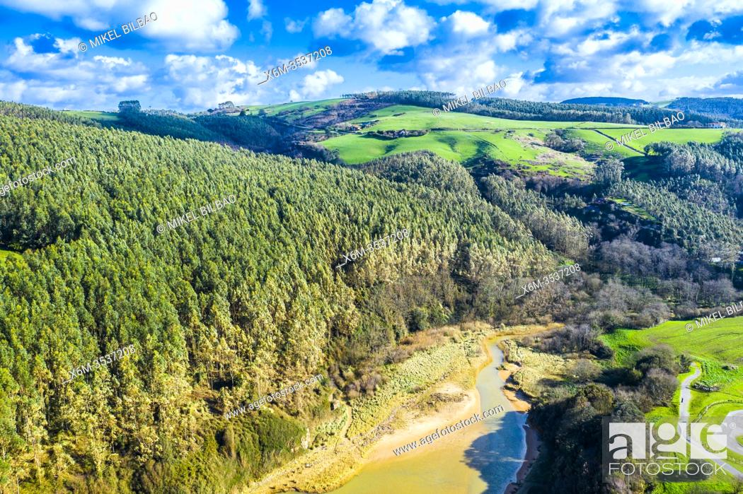 Stock Photo: Eucalyptus forest aerial view. Ribamontan al Mar. Cantabria, Spain, Europe.