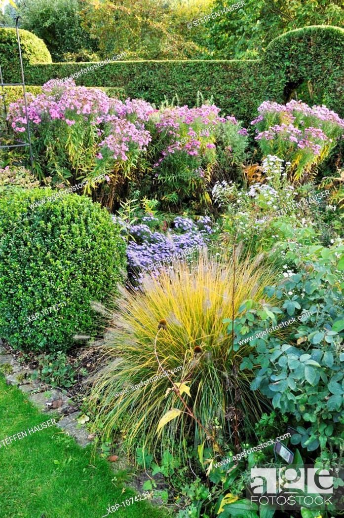 Stock Photo: Autumnal garden with Chinese fountain grass Pennisetum and asters Aster  Design: Marianne and Detlef Lüdke.