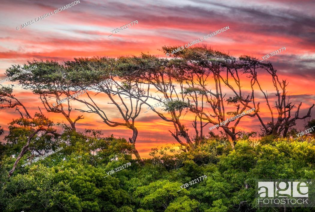 Stock Photo: Bent trees in Gulf Shores Alabama.