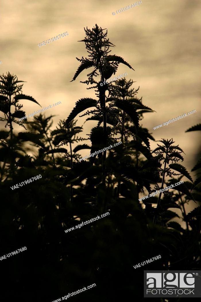 Stock Photo: natural, climate, season, scenic, calm, serene.