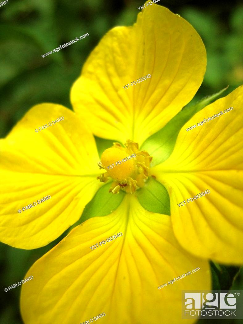 Stock Photo: Flower, Curitiba, Paraná, Brazil.