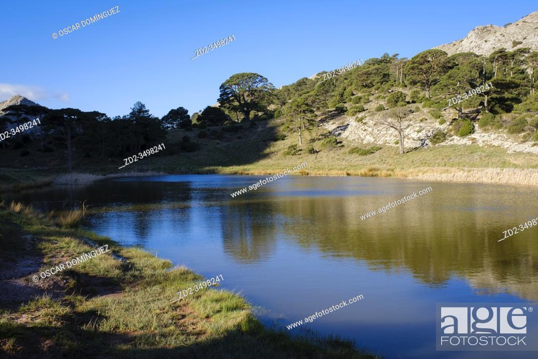 Imagen: Mediterranean vegetation reflected in small pond. Els Ports Natural Park. Catalonia. Spain.