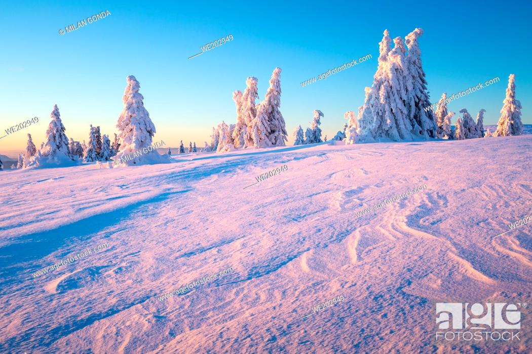 Stock Photo: Winter forest in Mala Fatra mountain range, Slovakia.