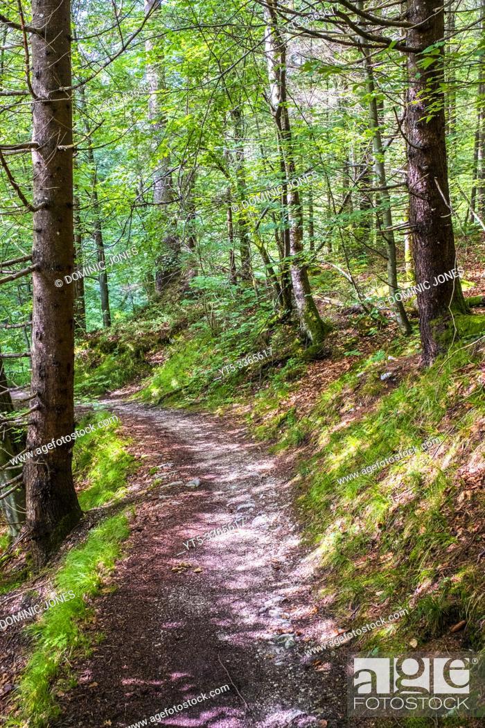 Stock Photo: Hiking foorpath through Bavarian woodland. ;.