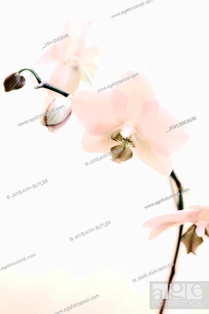 Imagen: a lovely feminine single stem orchid - sepia toned.