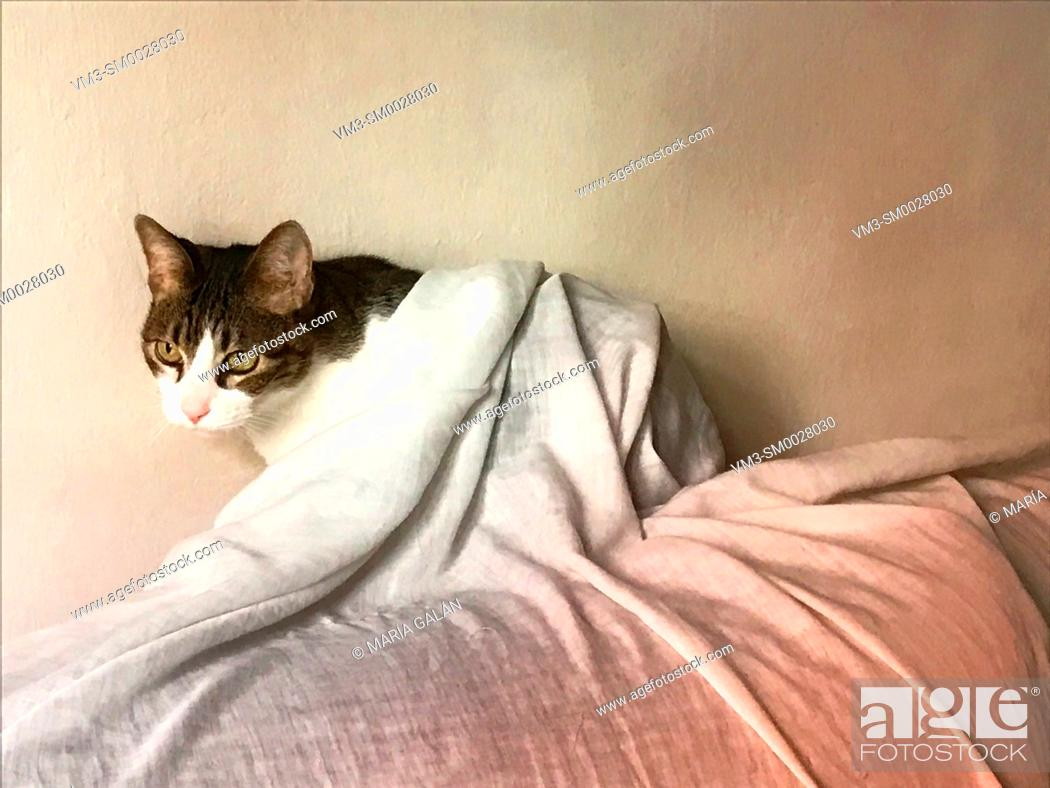 Stock Photo: Tabby and white cat hidden under a sheet.