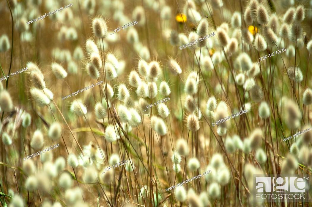 Stock Photo: Wild grasses.