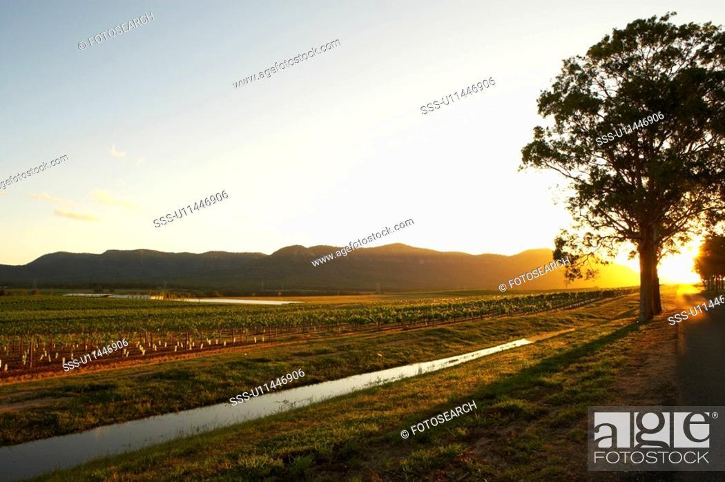Stock Photo: Sunset at Vineyard, Hunter Valley, Australia.