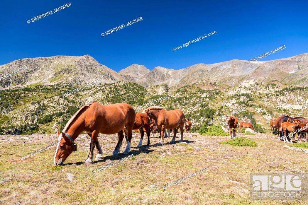 Imagen: France, Pyrenees Orientales, Capcir region, Parc Naturel Regional des Pyrenees Catalanes (Natural Regional Park of Pyrenees Catalanes), horses of the Carlit.