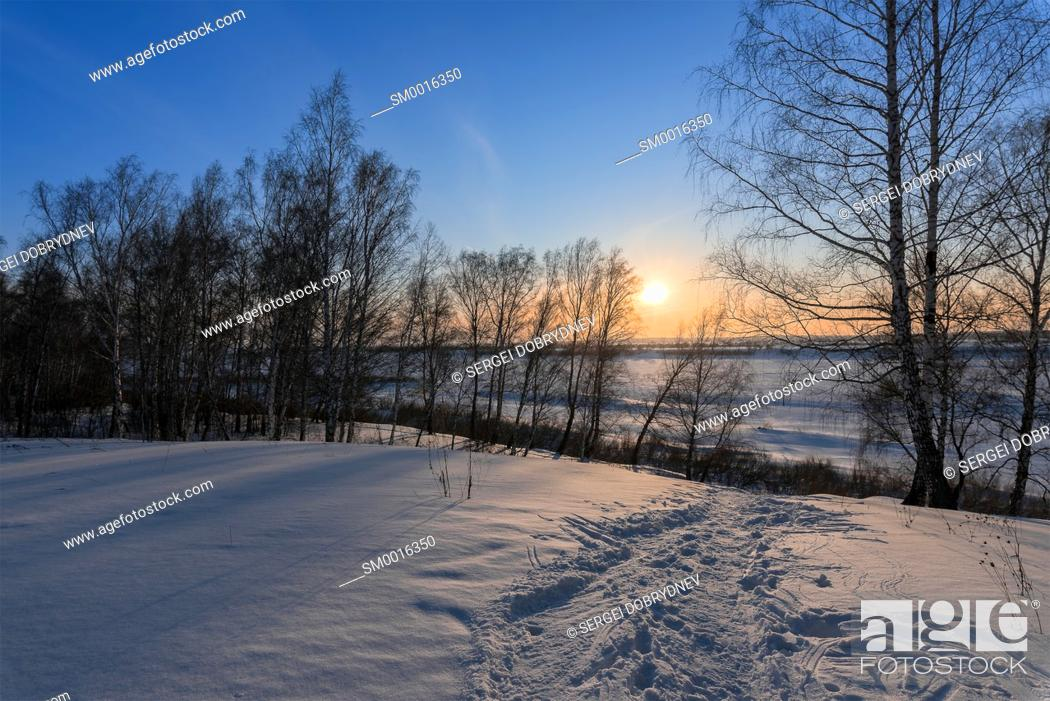 Stock Photo: Birch trees and setting sun on the edge of a winter forest.