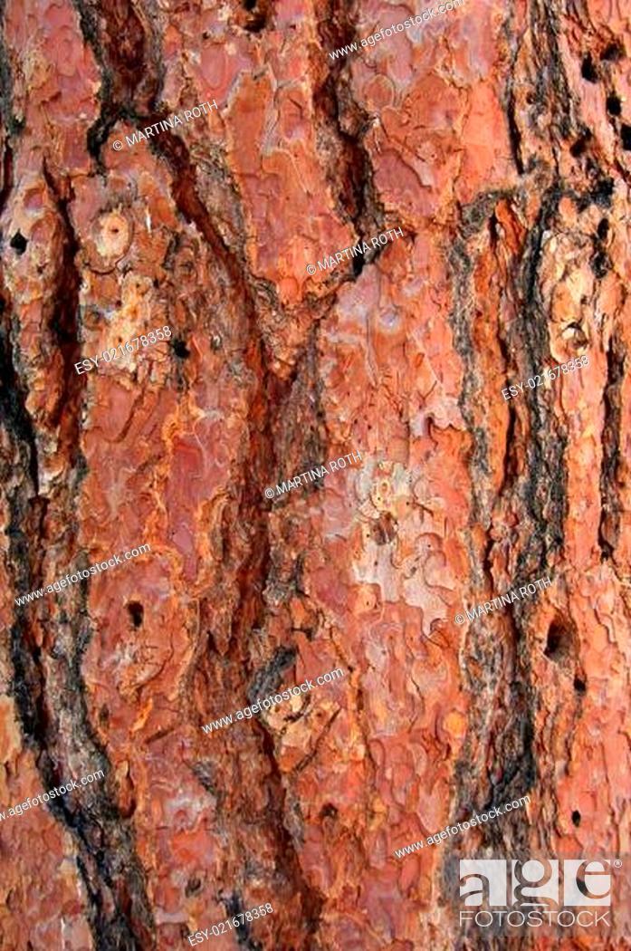 Stock Photo: Natural texture.