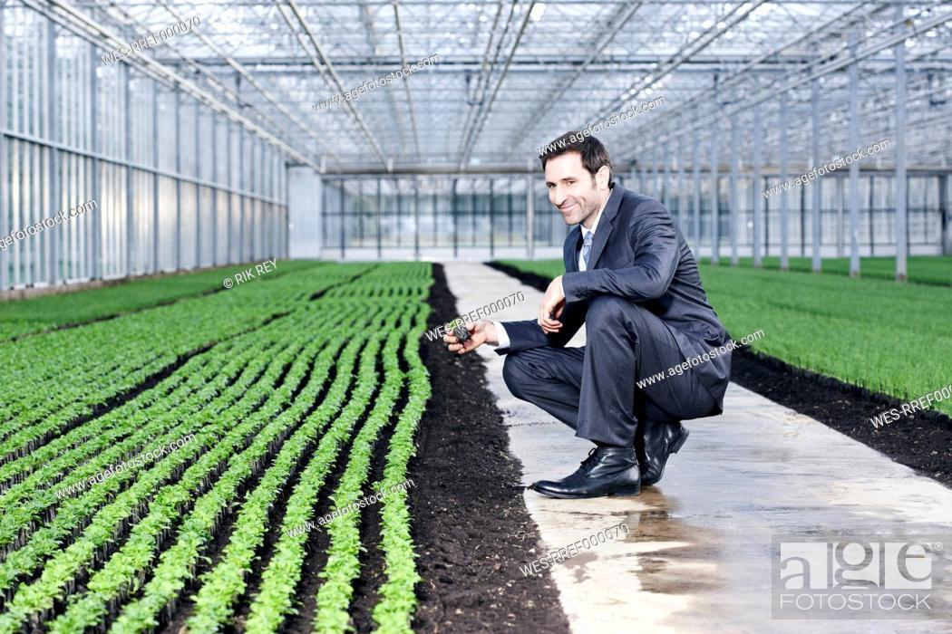 Stock Photo: Germany, Bavaria, Munich, Mature man examining seedlings in greenhouse.