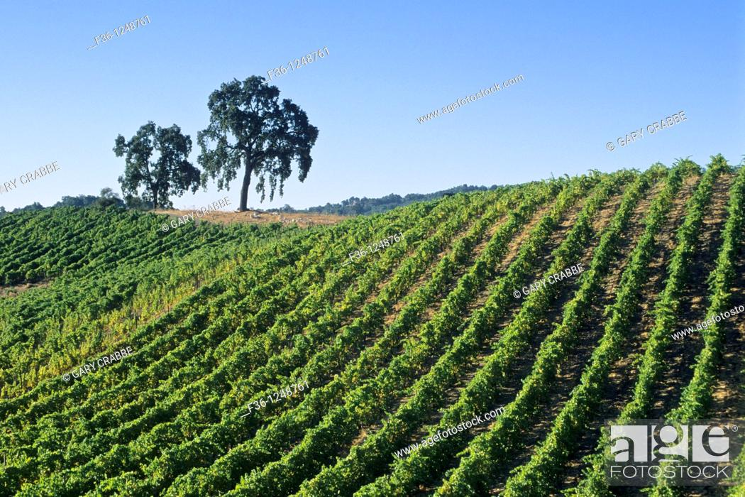 Stock Photo: Tablas Creek Vineyards, Adelaida Road, Paso Robles, San Luis Obispo County, California.