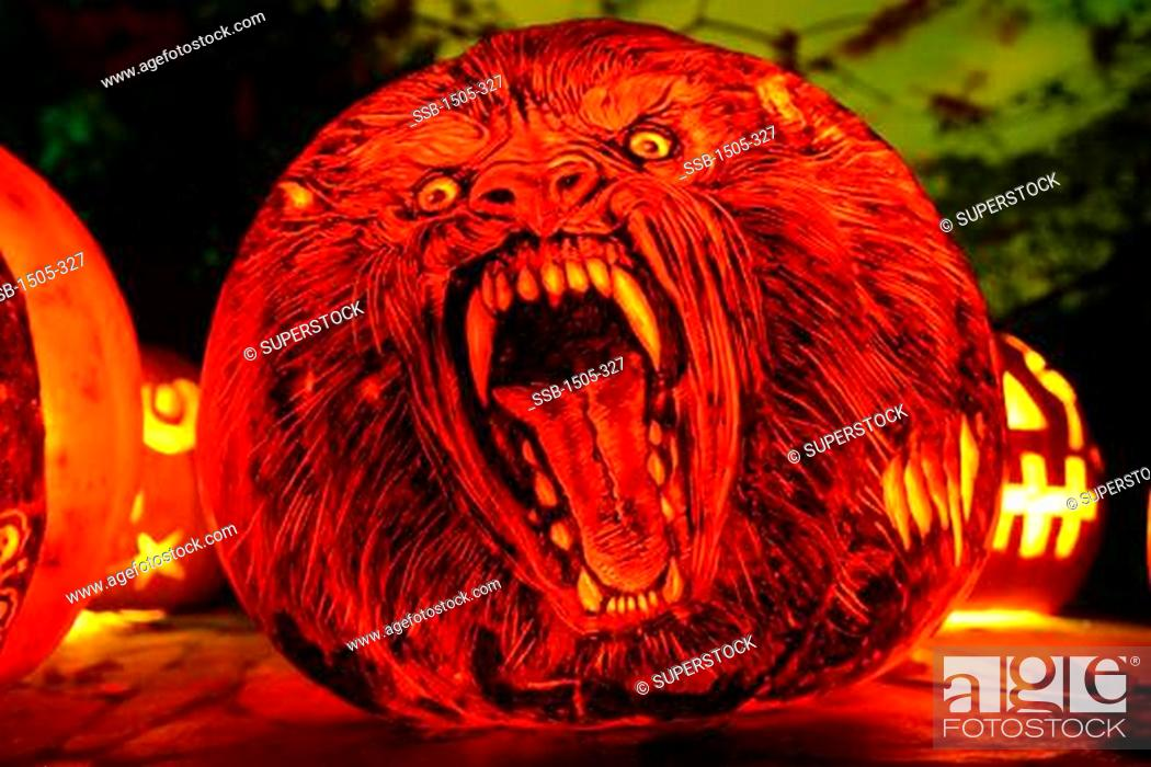 Imagen: Close-up of a jack o' lantern with the face of Werewolf, Roger Williams Park Zoo, Providence, Rhode Island, USA.