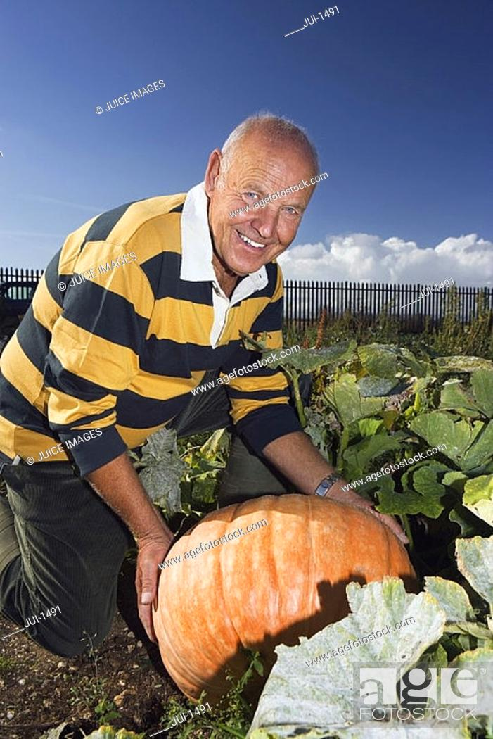 Stock Photo: Senior man kneeling beside large pumpkin in vegetable garden, smiling, side view, portrait.