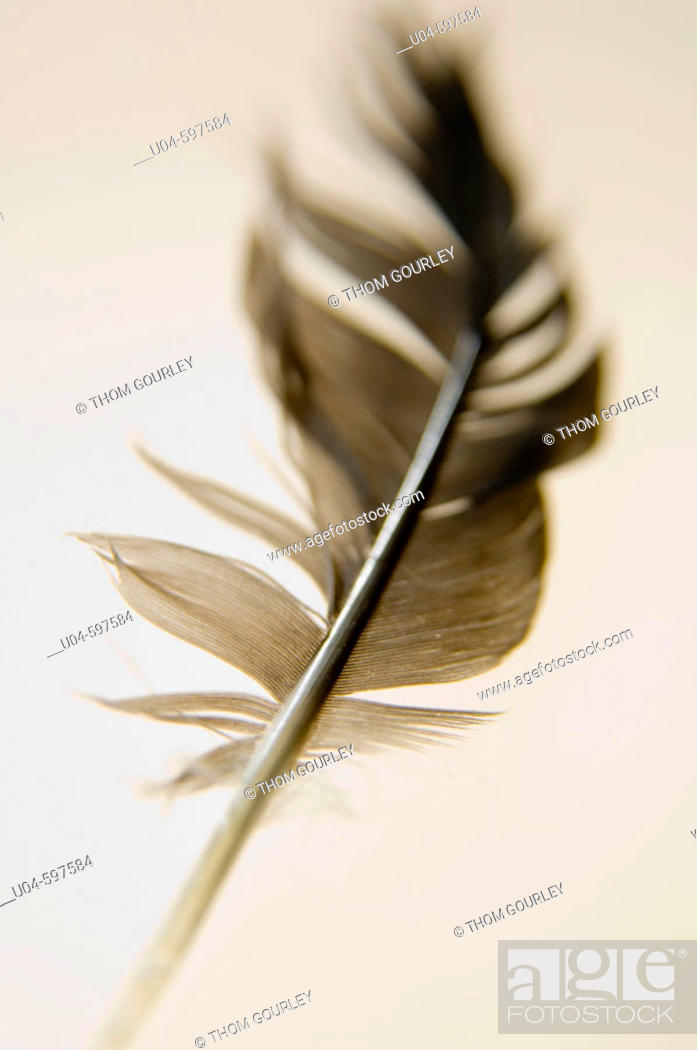 Stock Photo: Falling feather.