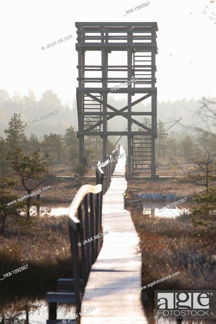 Stock Photo: Wooden Watchtower and Boardwalk in Männikjärve Bog, Estonia.