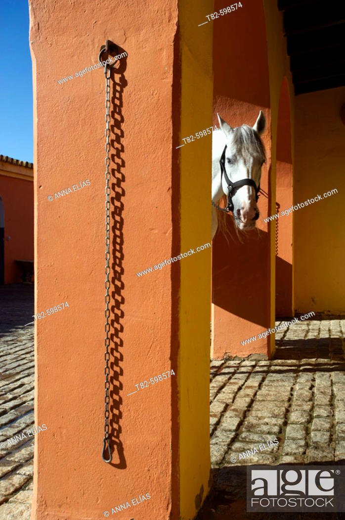 Stock Photo: Horse in stable. Sevilla, Andalusia, Spain.
