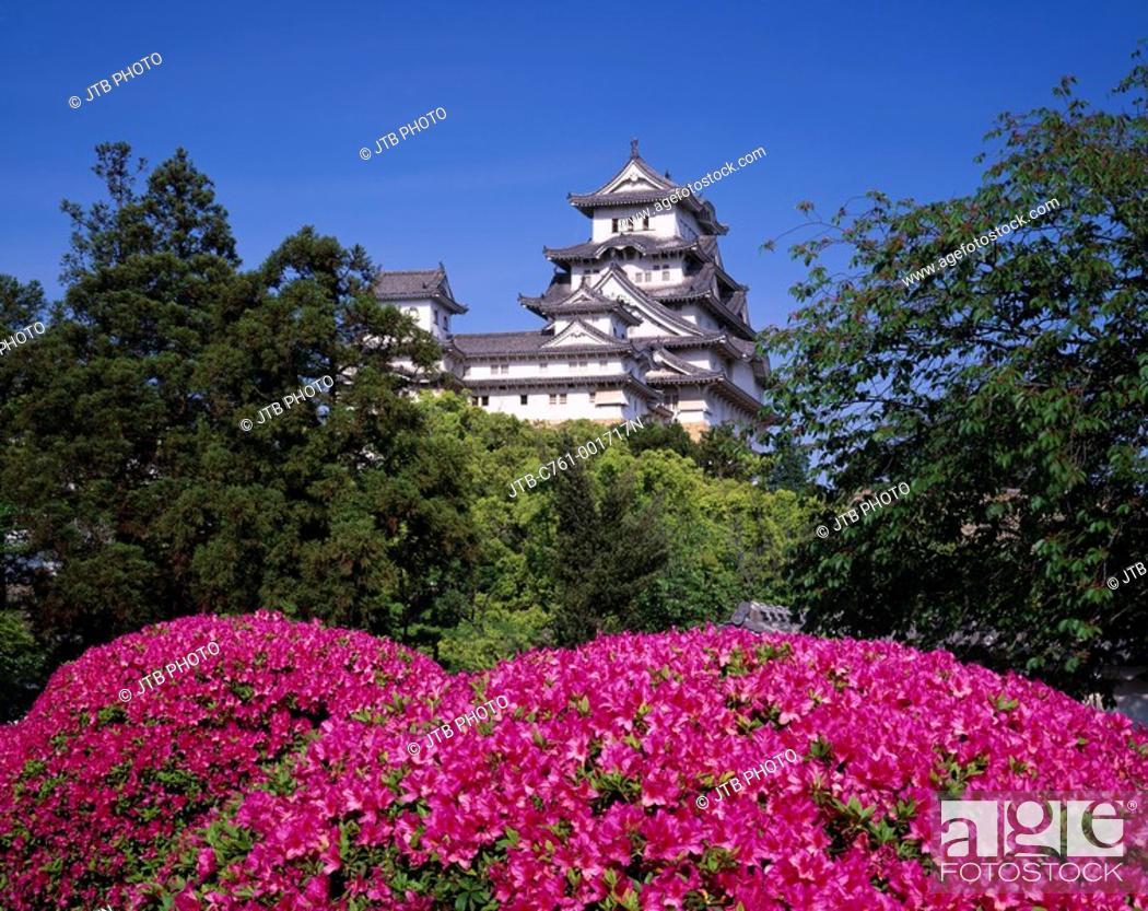 Stock Photo: Azalea, Himeji Castle, Himeji, Hyogo, Japan.
