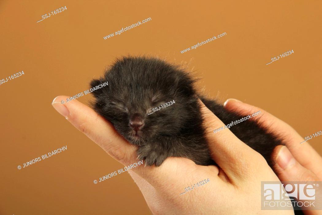 Stock Photo: domestic cat - kitten on hand.