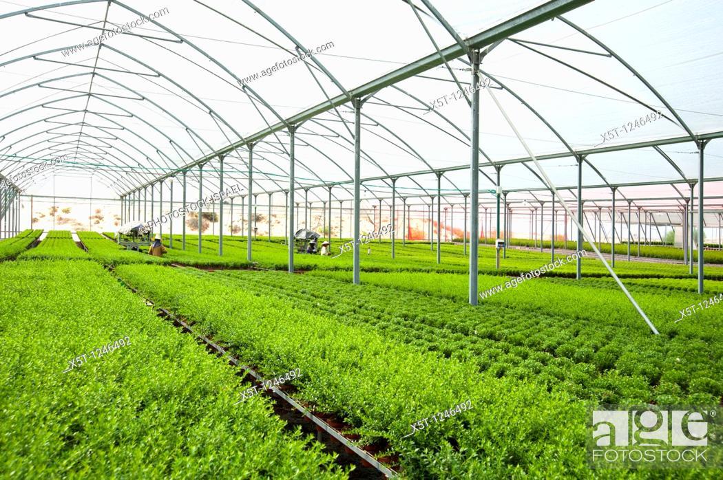Marvelous Israel Aravah Desert Plants In A Greenhouse Stock Photo Home Interior And Landscaping Oversignezvosmurscom