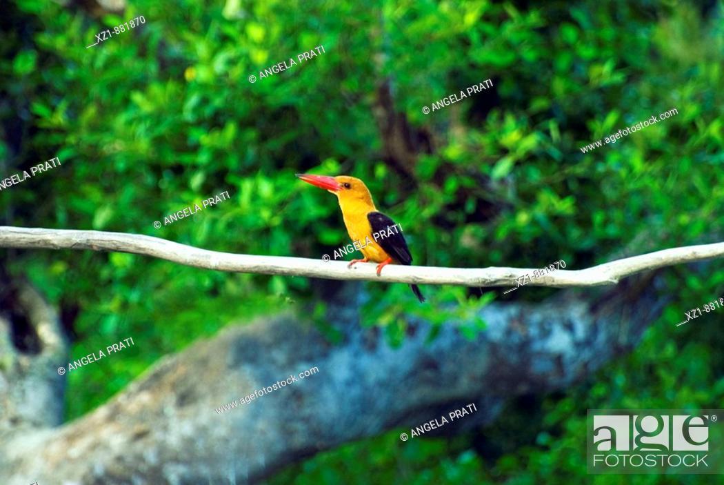 Stock Photo: Bird, Ganges Delta, Sundarbans, Bangladesh.