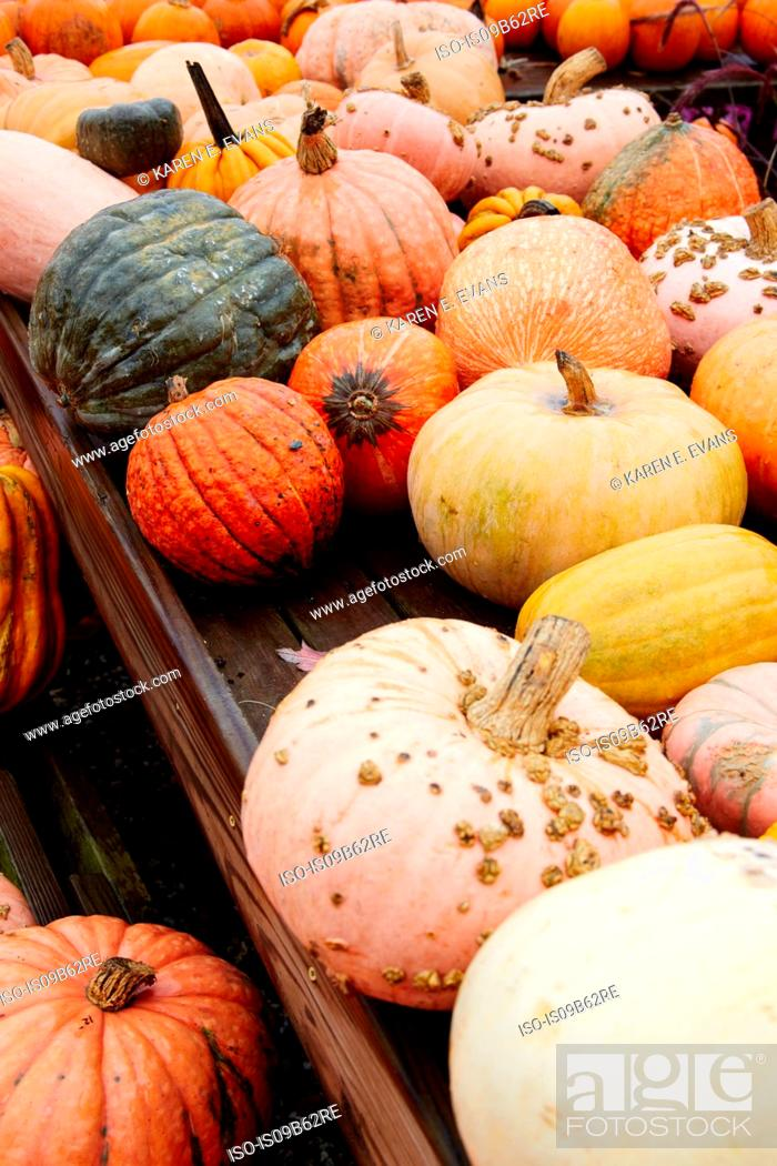 Stock Photo: Autumn coloured pumpkins and squashes on garden centre stall.