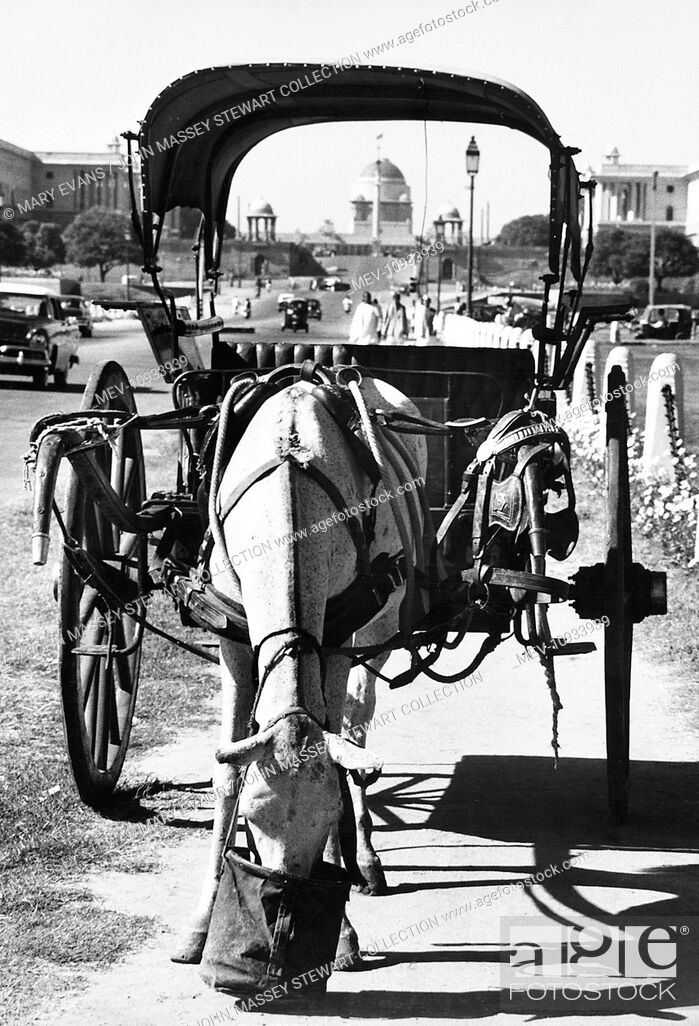 Stock Photo: A horse taking a break for something to eat at the side of a main road in New Delhi, India, with government buildings in the background.