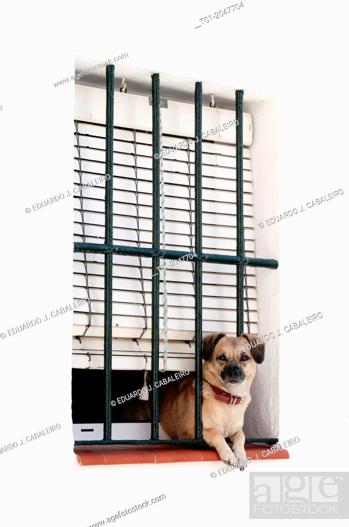 Stock Photo: Puppy looking out a barred window. Cazalla de la Sierra. Seville. Andalusia. Spain.