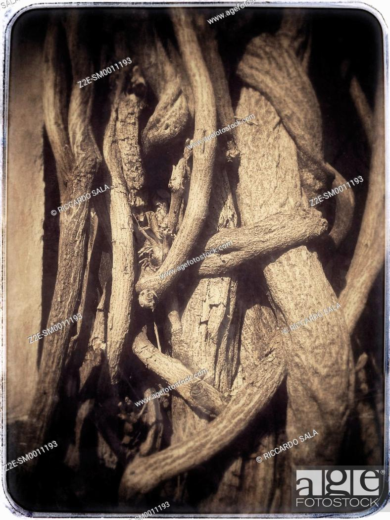 Stock Photo: Tree Trunks.