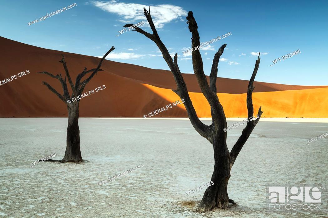 Stock Photo: trees of Namibia,namib-naukluft national park, Namibia, africa.