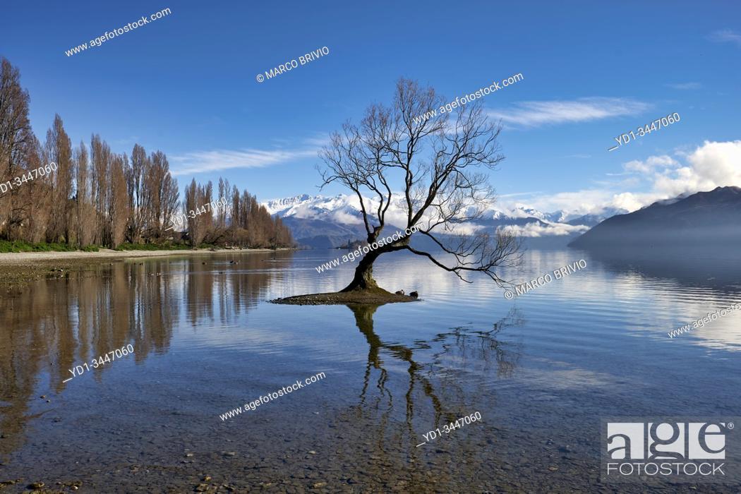 Stock Photo: Wanaka Tree on Lake Wanaka. New Zealand.
