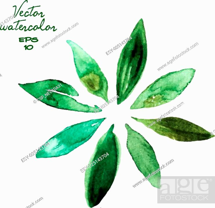 Stock Vector: green watercolor leaves.
