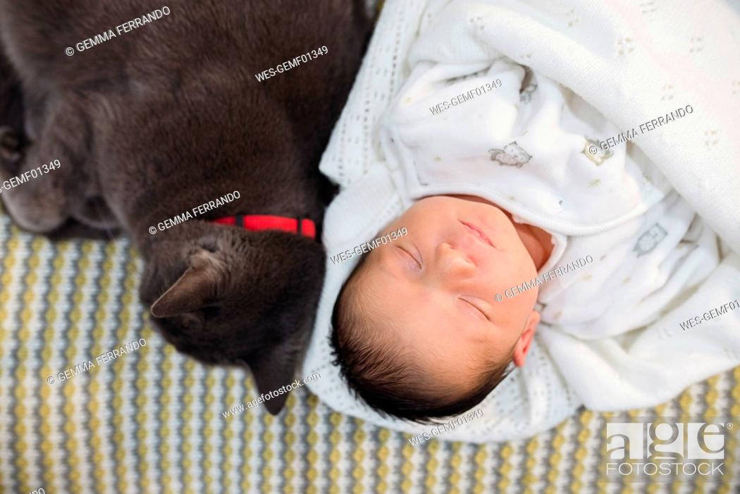 Stock Photo: Newborn baby girl sleeping on the couch next to a gray cat.