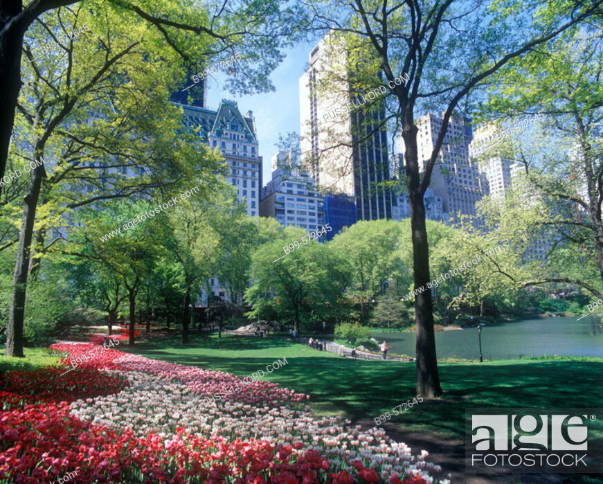 Stock Photo: Pond, Central Park, Manhattan, New York, USA.