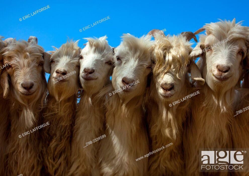 Stock Photo: Goats, Opal Village Market, Xinjiang Uyghur Autonomous Region, China.