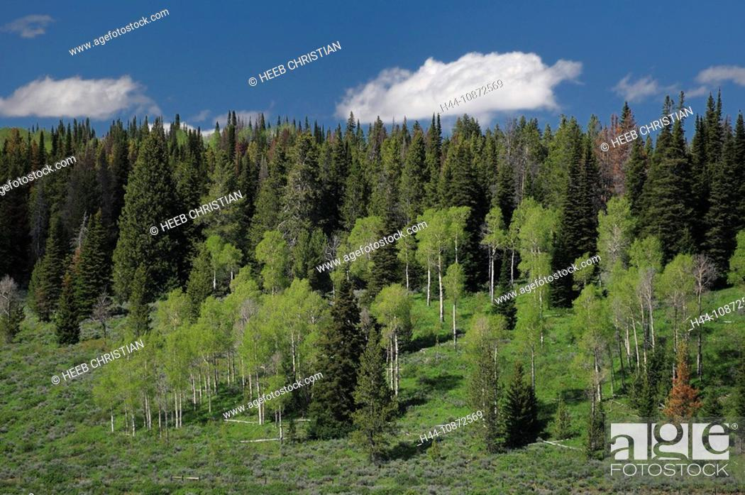 Stock Photo: Landscape at Flying A Ranch, Pinedale, Wyoming, USA.