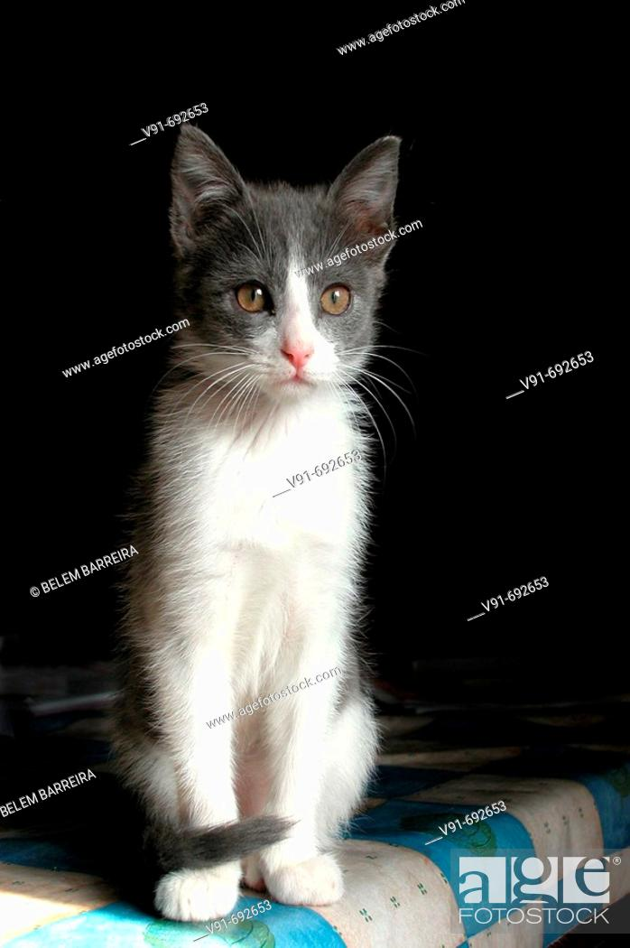 Stock Photo: 3 month old cat.