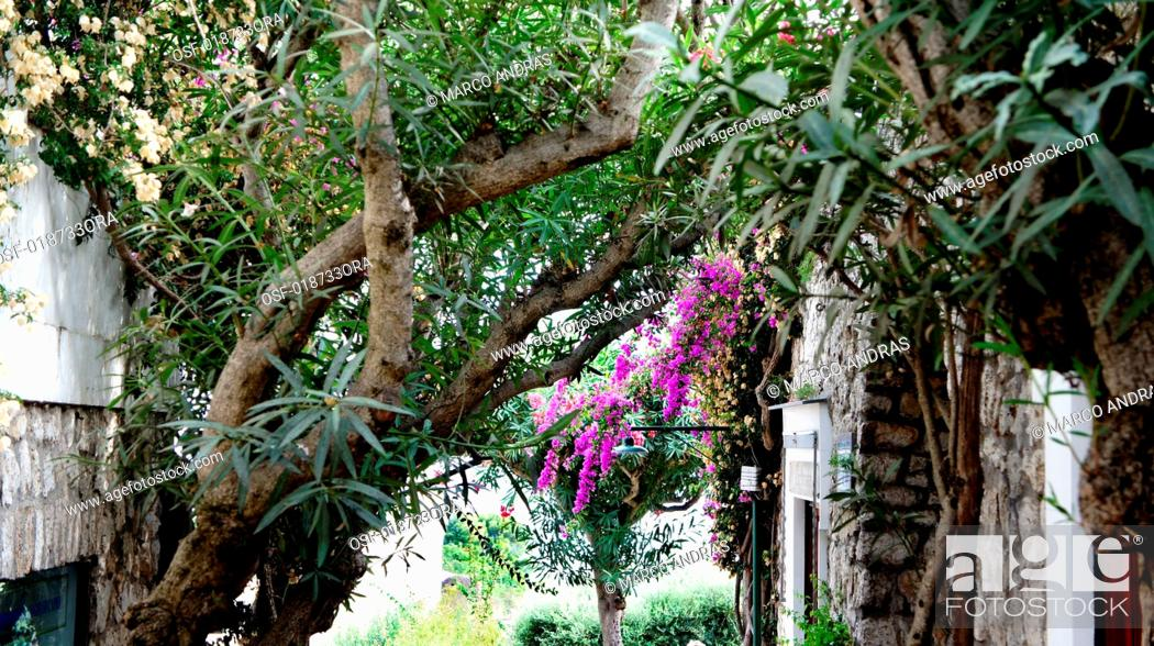 Imagen: Italy, Capri.