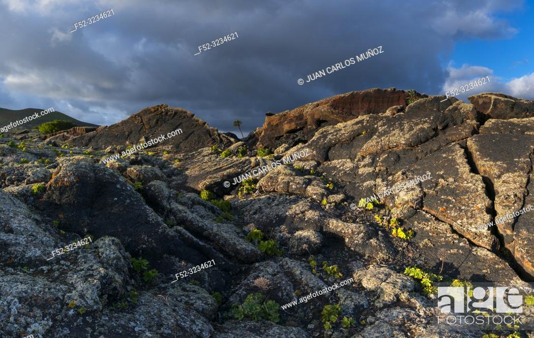 Stock Photo: Bejeque, Lava field and lichens , La Geria, Lanzarote Island, Canary Islands, Spain, Europe.