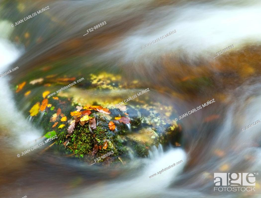 Stock Photo: Atlantic Forest. Muniellos Integral Reserve. Asturias. Spain.