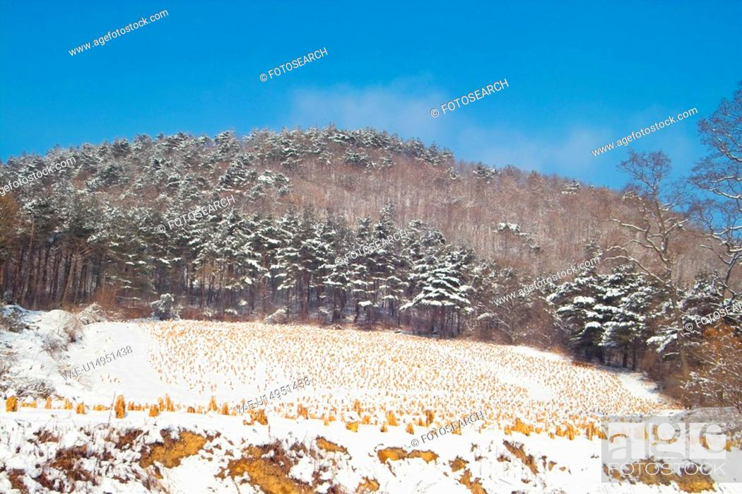 Stock Photo: background, snow, snowfield, snowy, winter, landscape, tree.