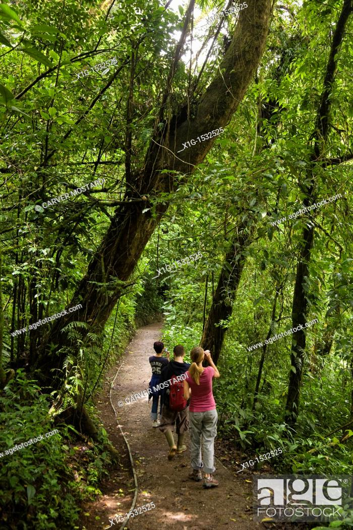Stock Photo: Group of hikers watching wildlife along a trail in the Monteverde Cloud Forest Reserve, Costa Rica.
